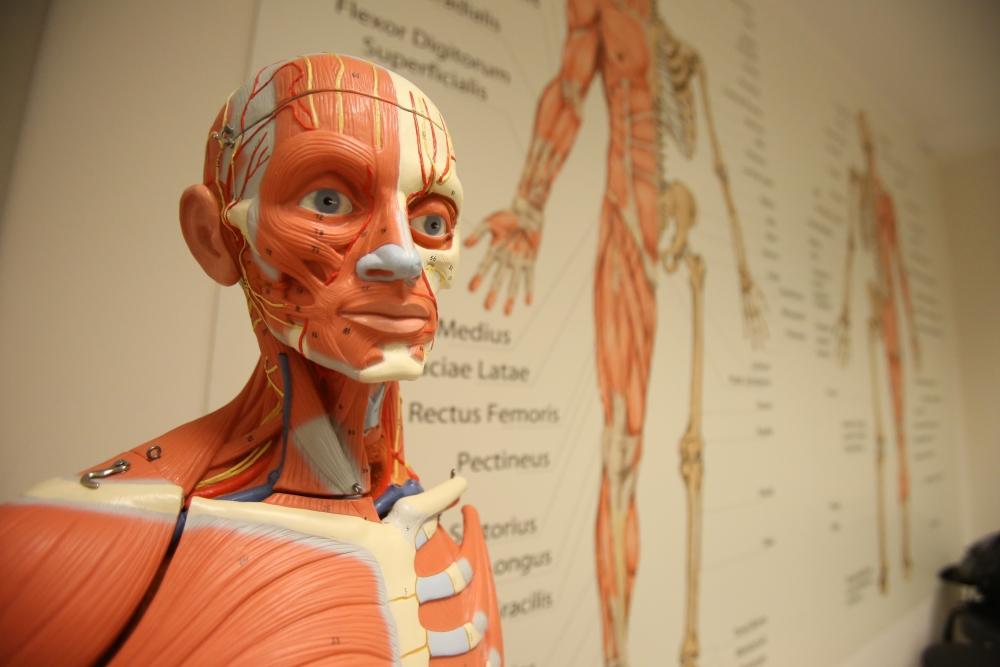 Anatomie Training/Präparationskurs - Gerber